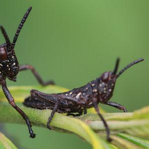 """Во тек е незабележителна """"инсект апокалипса"""" која може да влијае на животот на Земјата"""