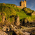 Во Шкотска пронајдена најстарата фосилизирана стоногалка