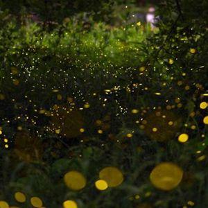 Светлечки инсекти има сè помалку, за се пак се виновни луѓето