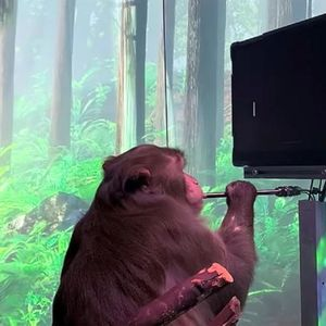 Neuralink објави снимка од мајмун кој со мислите управува видеоигра