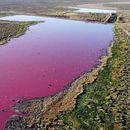 Аргентинска лагуна доби розова боја поради загадување