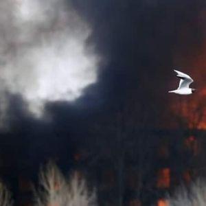 (ВИДЕО) Руски тинејџерки запалиле 200 тони слама за да направат снимка за ТикТок