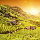 Šetnja kroz vinske regione Italije