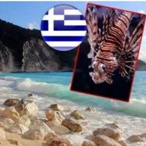 """Македонци внимание: Опасни """"натрапници"""" се кријат на грчките плажи"""