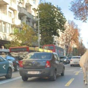 Центарот на Скопје има коњ без принц, а еве што имаат Прилеп, Битола, Кичево, Кочани… среде центар