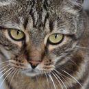 Ostao da spasava mačke u Fukušimi i ne želi da ode dok se ne zbrine poslednju