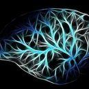Istraživanje pokazalo: Moždani udar može biti prvi simptom korone kod mladih
