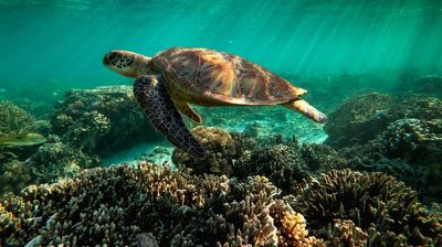 "Unesko: Veliki koralni greben bi trebalo se nađe na listi ,,ugroženih"""