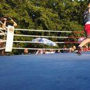 CRVENA ZVEZDA ILI SOMBOR? Ko će biti novi srpski šampion u boksu?