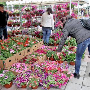 Srbija i jug Francuske su najbolja podneblja za gajenje OVOG cveta, a EU ludi za njim
