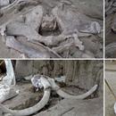 """Pronađene kosti 14 mamuta od pre 14.000 godina: """"Najveće otkriće do sada"""" FOTO"""