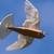 Robot-ptica sa pravim perjem uspešno poleteo VIDEO