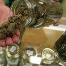 Pronađena laboratorija za uzgoj marihuane u Pančevu, troje uhašpeno