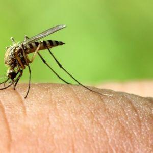 Prenošenje virusa sa komaraca na ljude obično se dešava u avgustu VIDEO