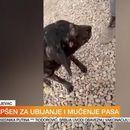 """Uhapšen mučitelj pasa u Kragujevcu; Radnici azila tvrde: """"To je gnusna laž"""" VIDEO"""