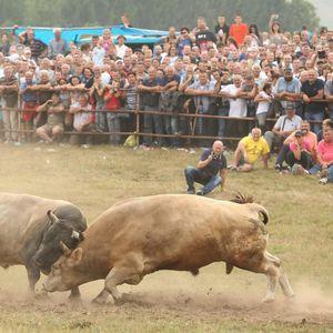 Bik Žujica ponovo pobijedio na Kočićevom zboru