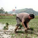 Земјоделците и откупувачите ја оценуваат годинашната сезона како една од најдобрите