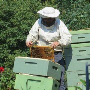Stariji pčelari NE MOGU napolje, a lopovi im KRADU košnice