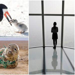 Моќни фотки кои ќе ви ги отворат очите за светот кој сами си го уништуваме