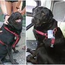 Запознајте ја Еклипс - Кучето кое само се вози со градски автобус