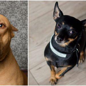 Зошто носот им е влажен и уште 9 работи за кучињата кои ве интересираат