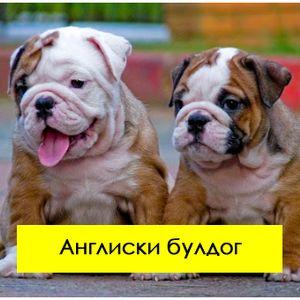 """5 раси на кучиња кои изгледаат """"страшно"""", а се многу мили"""