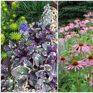 Растенија за вашиот двор кои не бараат многу грижа