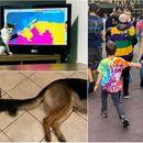 14 смешни фотографии направени во вистинскиот миг