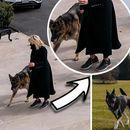 Новата прва дама на САД нема проблем да ги замени штиклите со спортски патики – ги пречека кучињата во Белата куќа