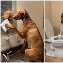 """Мијат садови, метат, го чистат тоалетот – како изгледа кога кучињата ги """"преземаат"""" домашните обврски? (фото)"""