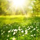 U Srbiji danas sunčano i toplo, temperatura do 33 stepena