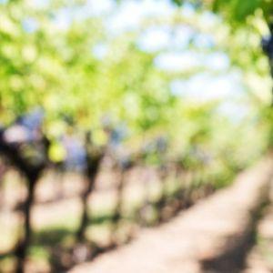 Više od 120 godina vinskog turizma u Srbiji