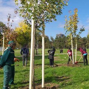 Drvo prijateljstva: Beograd bogatiji za 30 sadnica drveća