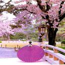 Совршена пролет во Јапонија!