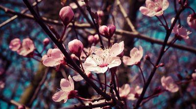 Još jedan pravi prolećni dan, od utorka pad temperature