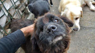 STRAHOTA: Mrtvog psa držao 24 sata u stanu, KOMŠIJE IZNELE DETALJE!