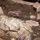 OTKRIĆE KOJE BI MOGLO DA PROMENI ISTORIJU: Pronađeni otisci stopala stari 23.000 godina, NEVEROVATNO!