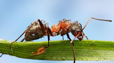 ČUDNE BUBE GMIŽU BEOGRADOM: Neobičan insekt pronađen u Surčinu, izgleda jezivo! Niko ne zna ŠTA JE!