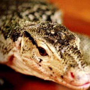 KORONO UGROZILA OPSTANAK PARKA KROKODILA: Neizvesna sudbina 2.000 divnih životinja