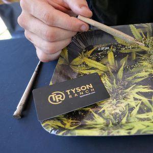 AMERIKANCI PRED VELIKOM ODLUKOM: Tiče se marihuane!