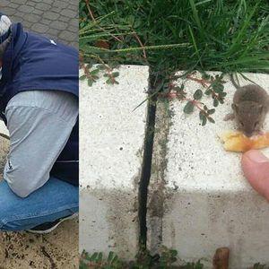 KADAR NEVERA: Miš istrčao pred Dragana tokom doručka, A ONDA SE DESILO NEŠTO SASVIM NEOČEKIVANO