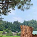 Јапонец стана првиот човек на светот со магистратура по нинџа-студии
