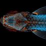 Најдобрите микроскопски фотографии во 2020 покажуваат прекрасни скриени чуда