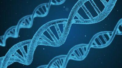 Научниците клонирале куна користејќи гени стари 30 години