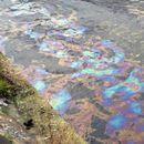 """Затвориха ВЕЦ """"Въча 1"""" заради замърсяването на река Въча"""