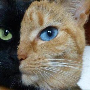 Интересни факти за котките