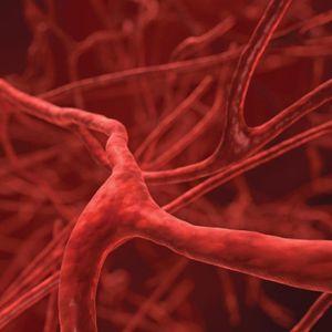 Създадоха уникални изкуствени кръвоносни съдове – ето за какво могат да се използват