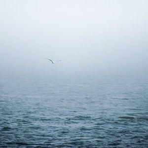 Зодиите на море – къде и как