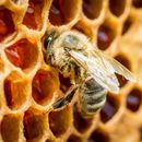 Sutra prskanje komaraca: Zaštitite pčele