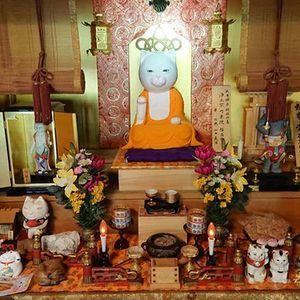 Во Јапонија постои храм за мачки и монасите се едноставно неодоливи!